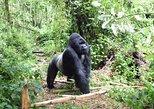 Lowland Gorilla trekking in Kahuzi-Biega National Park