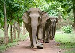 Ethical Elephant Jungle Sanctuary Tour from Chiang Mai