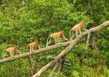 9-Day Borneo Explorer Tour