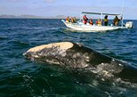 Baja Whale Watching Multi Day Tour