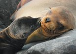 4-Day Galapagos Islands Express Tour