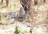 3-days Maasai mara migration safari from Mombasa town