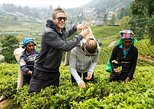 4 Day Tour to Kandy Nuwara Eliya Ella & Udawalawe Safari From Negombo