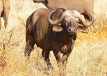 7-Days : The Ultimate Tanzania Safari