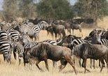 10 Days Safaris Holidays