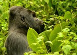Gorillas trekking in Bwindi Impenetrable Forest from Kigali