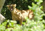 3 Day Best Game Drives and Launch Cruise