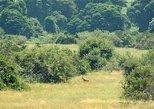 4 Days Murchison Falls Safaris