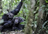 10 Days Classic Uganda Primate Tour and Community Work