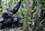 10-tägige, klassische Uganda-Tour: Primaten und Gemeindearbeit