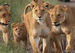 4-Day Small Group Maasai Mara and Lake Nakuru Safari from Nairobi