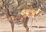 4-Day Private Tour to Samburu Shaba And Kenya Mountain Lodge from Nairobi