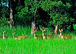 2 Nights 3 Days Chitwan National Park Tour from Kathmandu