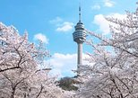 Daegu E-world Cherry Blossom Tour (Day Tour)