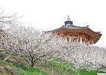 Gwang-yang Maehwa & Gurye Sansuyu Festival(Depart from Seoul or Busan)