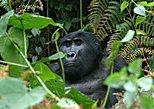 3 days Uganda Gorilla safari tour with relaxation on Lake Bunyonyi