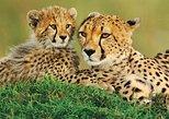 4 Days Animal Kingdom