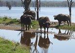 Big five safari-Masai Mara-Kenya