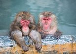 1-Day Snow Monkey Tour with All-You-Can-Eat Shabu Shabu Lunch (From Tokyo)