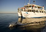 Jervis Bay Dolphin Watch Cruise