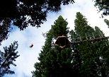 Zipline Treetop Tour