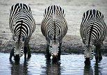 2 Days Wildlife Safaris at Lake Mburo National Park