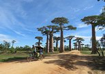 Morondava Day Tour to Kirindy Park and Baobab Avenue