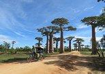 5 Day Tour Baobab Avenue Express from Antananarivo