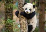 Chengdu Panda Base and Leshan Giant Buddha