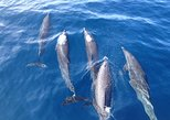 Dolphin and Snorkeling trip with CostaRican Companys