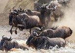 4 Days Masai Mara & Lake Nakuru Luxury Camping Safari