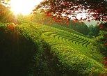 Incredible Boseong Green Tea Festival (Depart from Seoul or Busan)