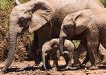 2 Days Sweetwaters Camp Classic Tour Package from Nairobi - Bruno Safaris Kenya