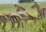 3 Days 2 Nights Safari Lake Manyara Ngorongoro Crater Tarangire National Park