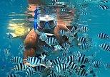 Reef Safari-Sainte Anne Marine Park