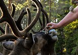 5-hour sightseeing in Helsinki and Nuuksio Reindeer Park