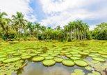 1 Day Xishuangbanna City Tour with Menglun Tropical Botanical Garden, Jinghong, CHINA