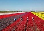 Tulip fields, Windmills and more