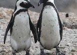 Penguins, Peninsula & Pinotage - Private Tour