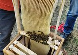 1 Day Bee Keeping Experience