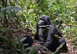 5-tägige Gorilla-Wildwasser-Rafting-Safari