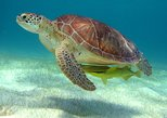 Half-Day Caribbean Sea Turtle and Cenote Snorkeling Tour from Cancun