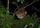 Monteverde Night Walk-Private Tour
