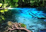 Jungle Tour to Emerald pool , Krabi Hot Spring and Tiger Cave Temple