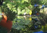 Majorelle Garden and Palmeraie Camel Ride from Marrakech