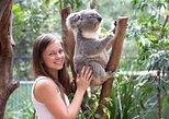 Kangaroos & Koala encounter experience (Half day private tour)