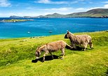 Private tour of Dingle and Slea Head with accredited National guide