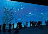 Entrance Ticket to the NAUSICAA, the biggest aquarium in Europe