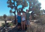 Joshua Tree National Park Van Tour