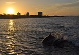 Fort Myers Dolphin and Shelling Sunset Cruise